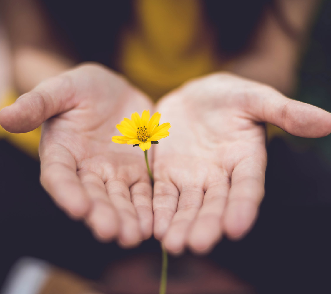 Photo of hands offering a flower