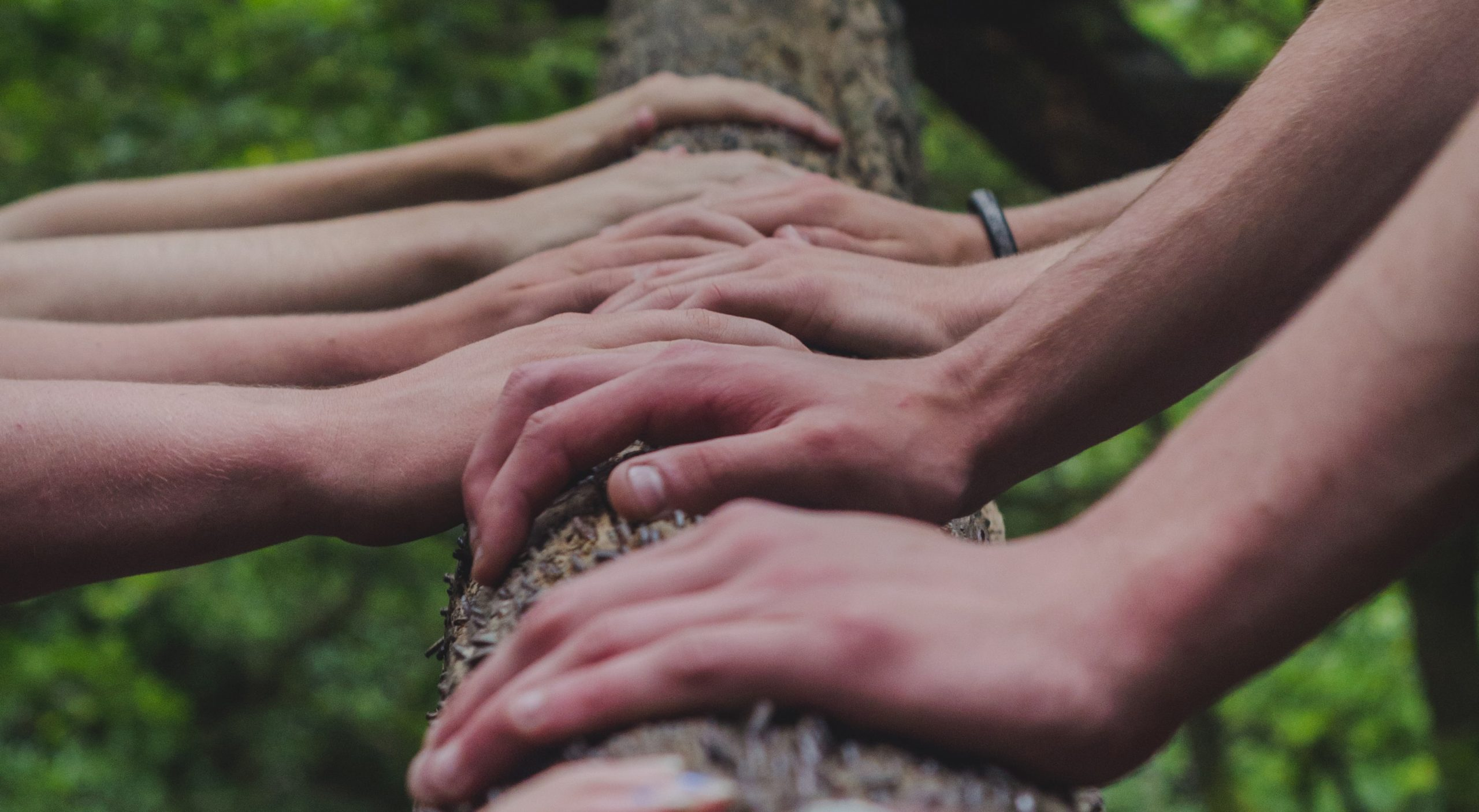 photograph of hands leaning against a tree branch