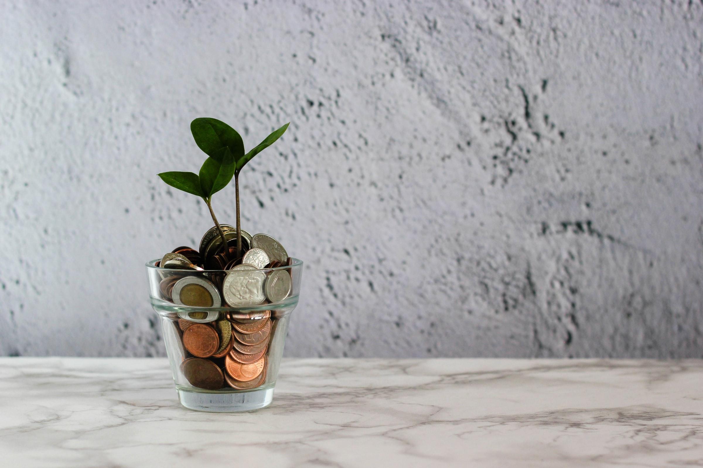 fotografia di un vasetto pieno di monetine da cui spunta un germoglio